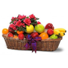 Fruit basket with houseplant (4 kg)