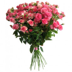 Pink spray roses 40 cm (only in Riga)