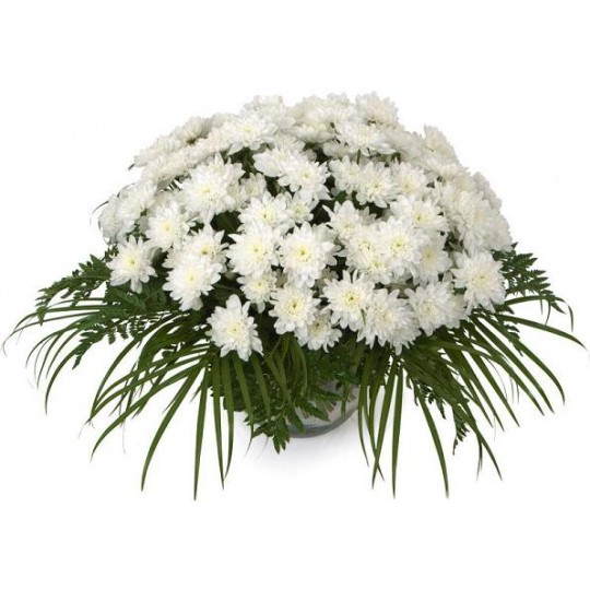 White chrysanthemums with greens | Flower delivery in Latvia