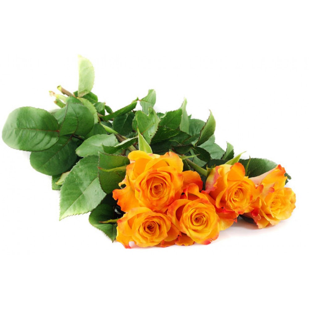 Orange roses 50 cm. Bouquet