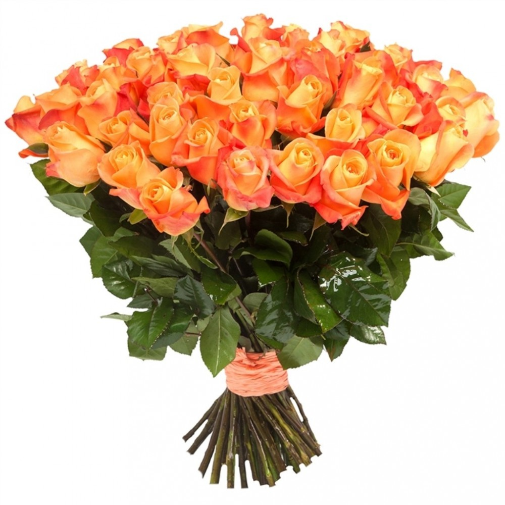 51 orange rose 50 cm