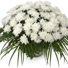 White chrysanthemums with greens