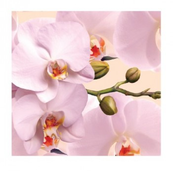 Greeting Card Orchid 6x6 cm