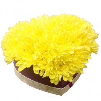 Yellow chrysanthemums in heart box