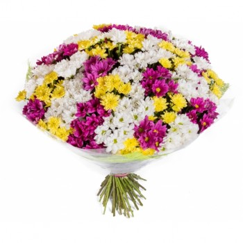 White, yellow and purple chrysanthemums
