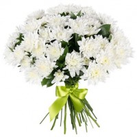 White chrysanthemums (select number)
