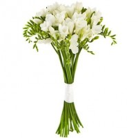 Freesias (select number)
